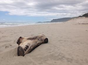 pakiri_driftwood