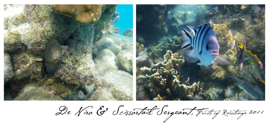 RaroFish