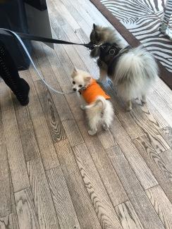 Doggies at Michael Kors, King's Rd.