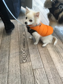 Doggie, at Michael Kors, King's Rd.